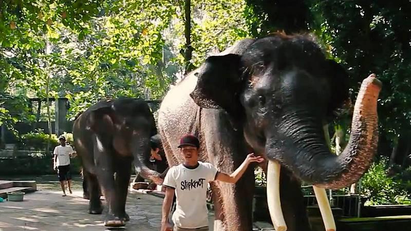 Bali Bakas Elephant Ride 2