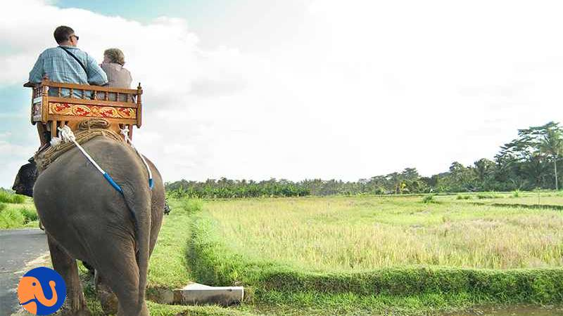 Creating Memorable Experience with Elephant Trekking Bali 3