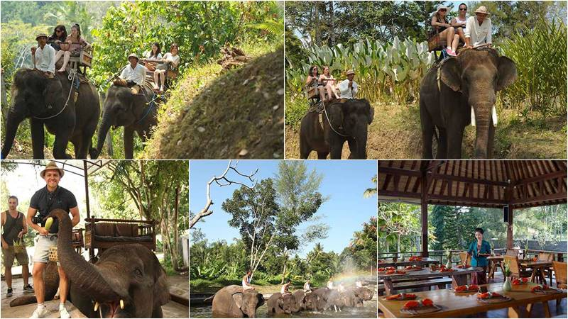 Bali Elephant Camp New Normal 1