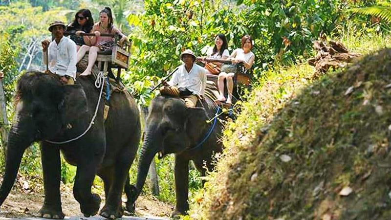 Creating Memorable Experience with Elephant Trekking Bali 2