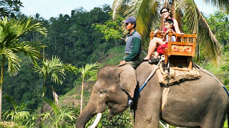Wonderful Experiences in Carangsari Elephant Park 3