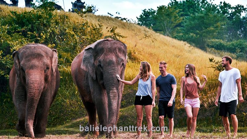 Amazing Bali Zoo Elephant Mud Fun 2019-2020 6