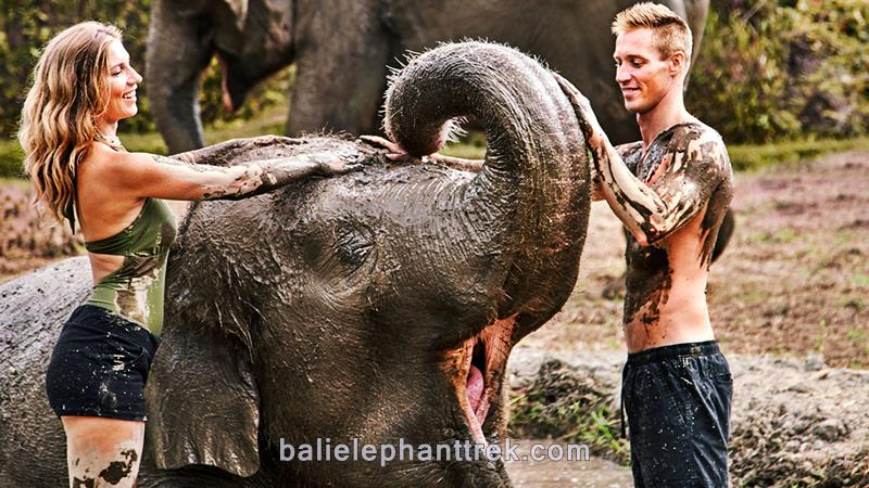 Amazing Bali Zoo Elephant Mud Fun 2019-2020 3