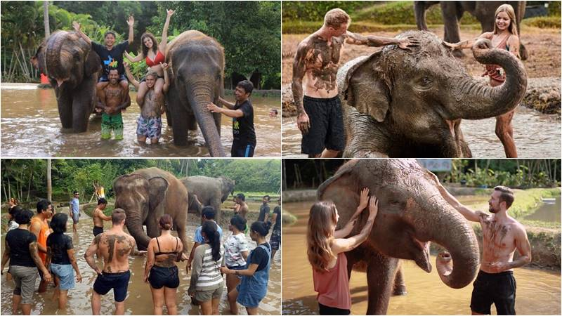 Amazing Bali Zoo Elephant Mud Fun 2019-2020 1