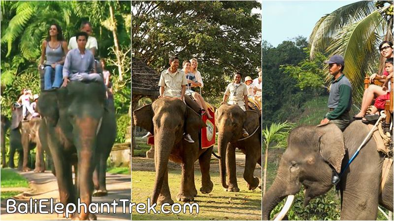 Bali Animal Safari Tour You Must Try at Least Once in Your Lifetime 1