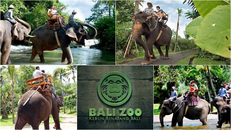 Bali Zoo Elephant Ride Tour Balielephanttrek