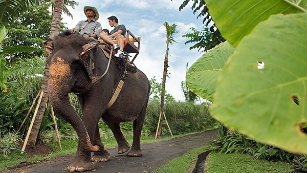 Guest Comments Bali Elephant Trek 1