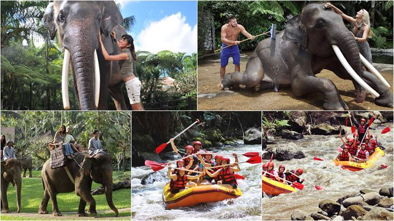 Bathing elephant and rafting bali tour