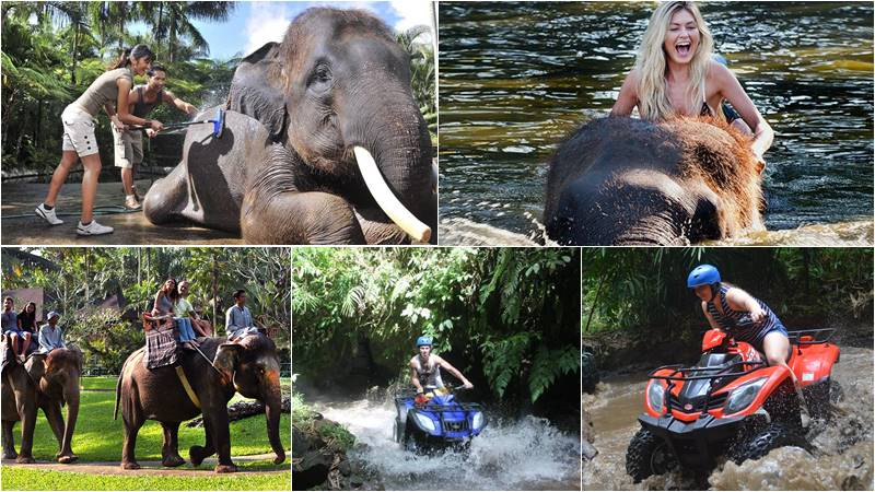 bathing elephant and atv ride