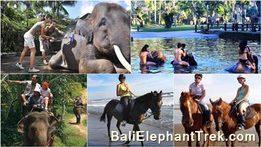 Favourite Combination Bali Elephant Packages 19