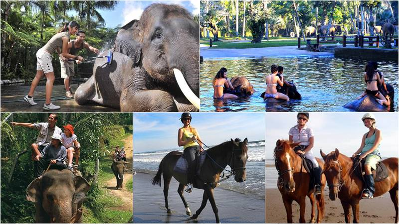 Bathing elephant and horse ride bali tour