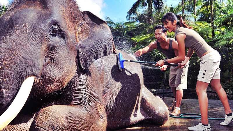 Intrigued by the Elephant Ride Bali price? Here goes the explanation! 3