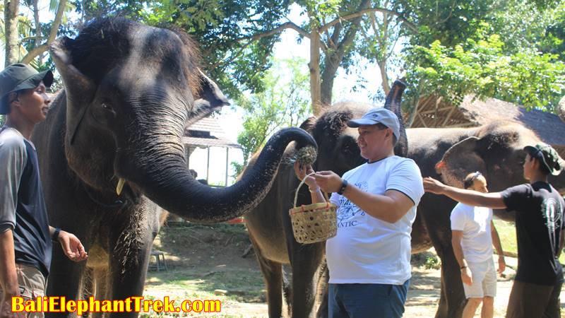 Elephant Education & Bathing 3