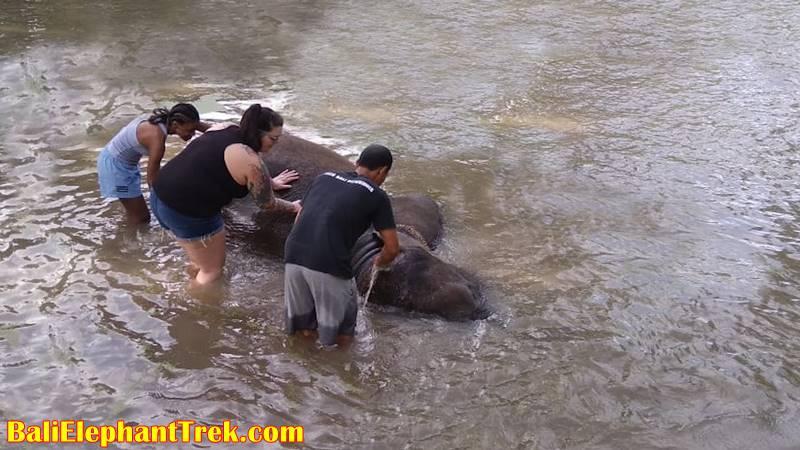 Elephant Education & Bathing 10