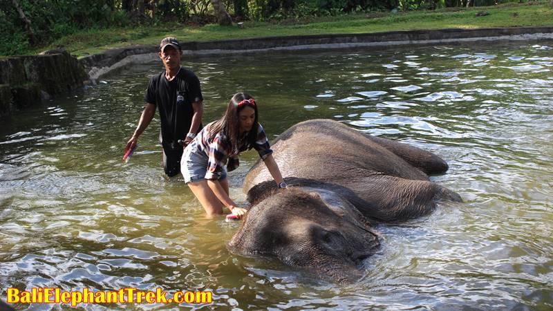 Elephant Education & Bathing 14