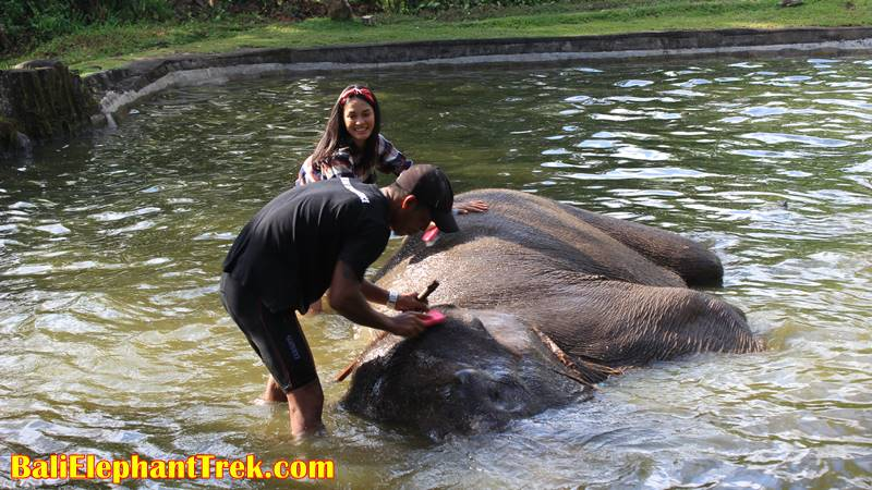 Elephant Education & Bathing 15
