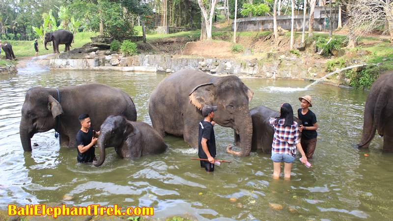 Preparation for Adventuring in Bali Wildlife Park 2