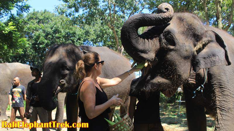 Creating Memorable Experience with Elephant Trekking Bali 4