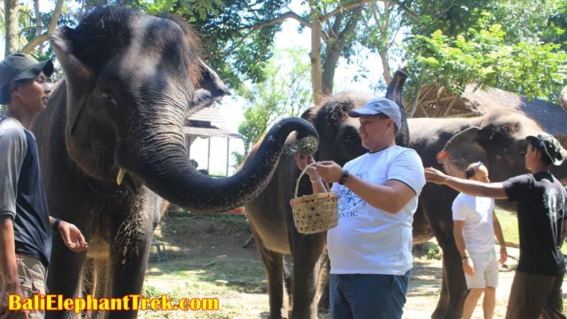 Elephant Education & Bathing 19