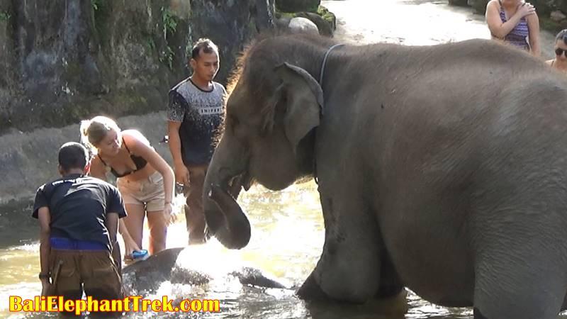 Elephant Education & Bathing 6