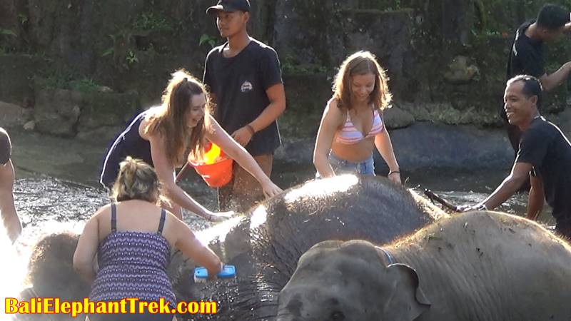 Elephant Education & Bathing 8