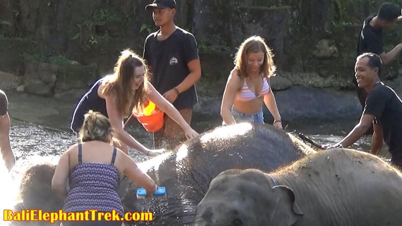 Elephant Education & Bathing 8