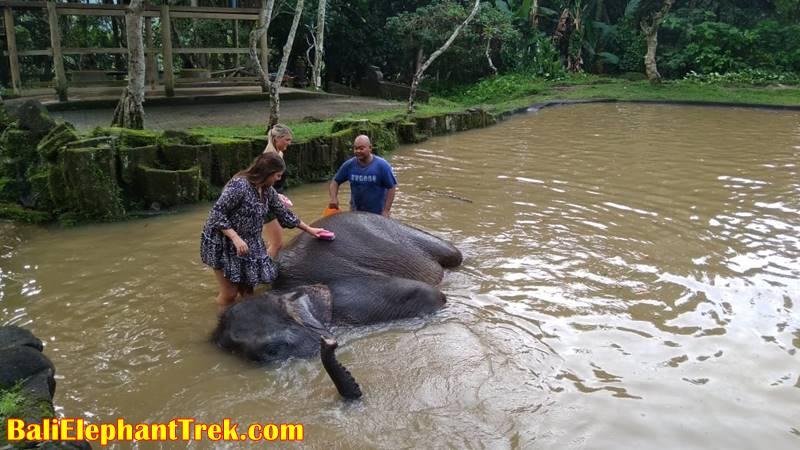 Elephant Education & Bathing 9