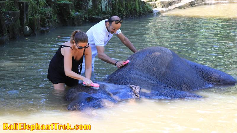 Elephant Education & Bathing 9