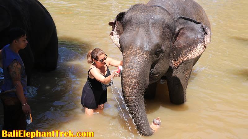 Elephant Education & Bathing 11