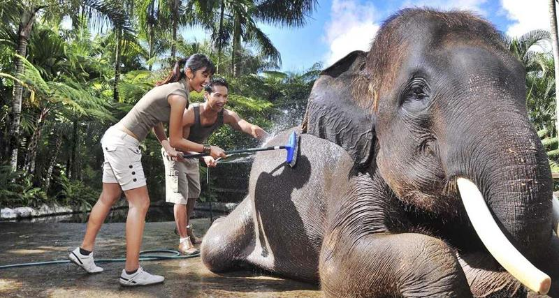 Experience Ubud in Different Way: Elephant Safari Ubud 2