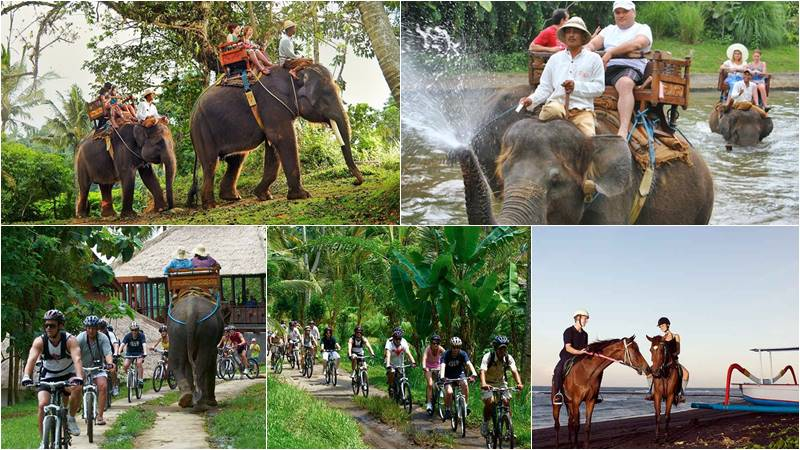 Bali Elephant Camp + FREE 1 Adventure Activity 1