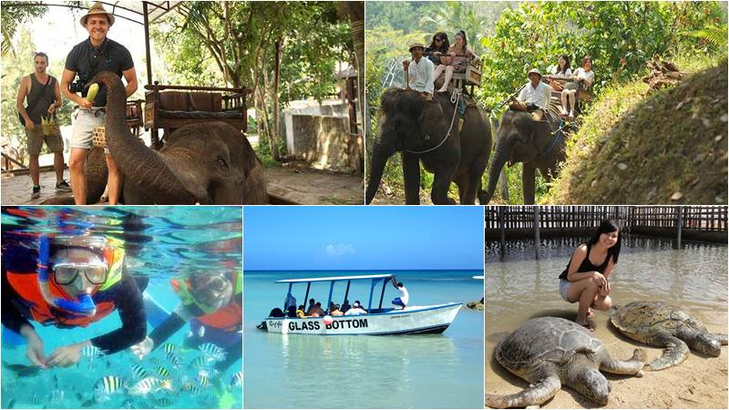 Bali Elephant Camp + Snorkeling + Turtle Island 1