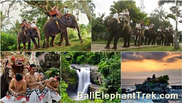 Favourite Combination Bali Elephant Packages 12