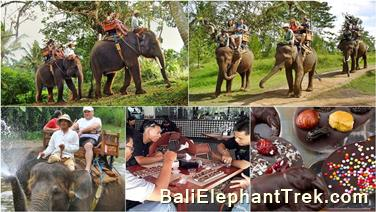 Favourite Combination Bali Elephant Packages 13