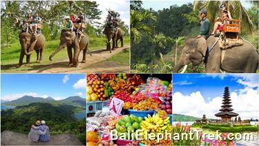 Favourite Combination Bali Elephant Packages 15
