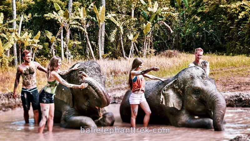 Amazing Bali Zoo Elephant Mud Fun 2019-2020 5