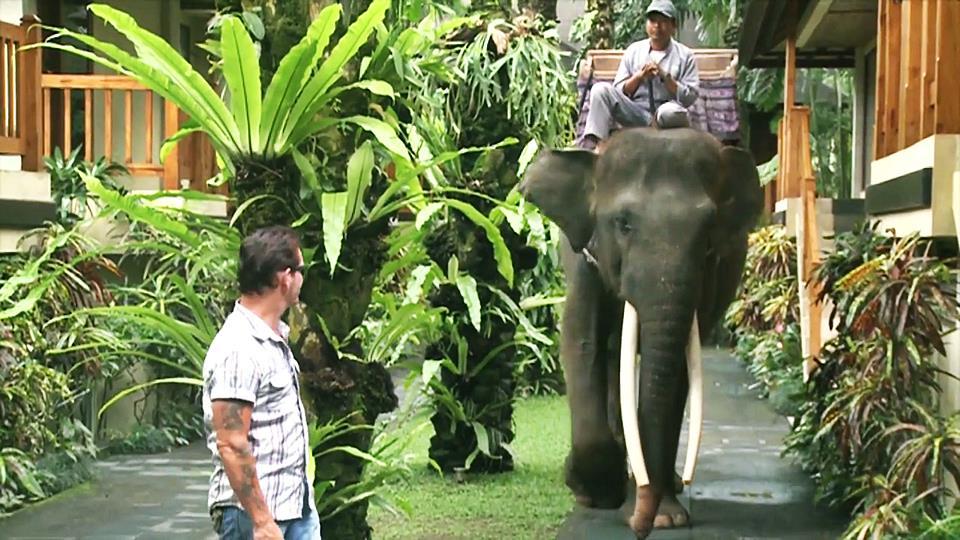 Elephant Park Bali in Ubud 1