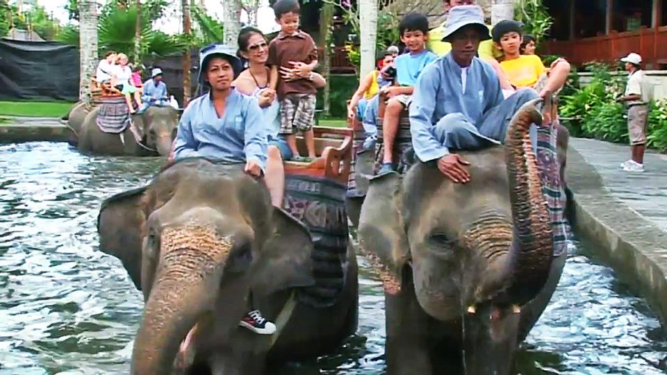 elephant ride bali price