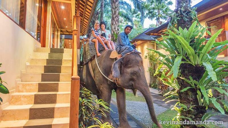 Enjoy Your Vacation with an Elephant Safari Lodge 1