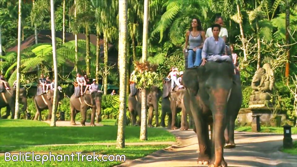 Experience Ubud in Different Way: Elephant Safari Ubud 1