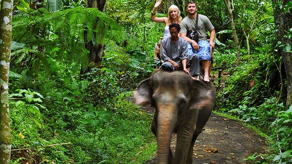Enjoy Unique Experience of Riding an Elephant Ubud Bali 1