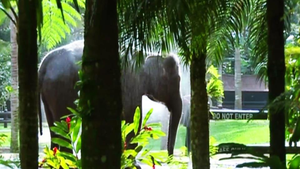 Ethical Elephant Sanctuary in Bali 3