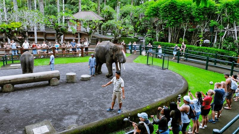 Best Tour of The Taro Elephant Safari Park Bali 2