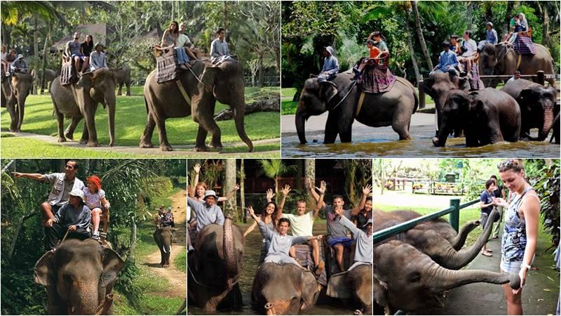 Wisata Naik Gajah di Taro 1