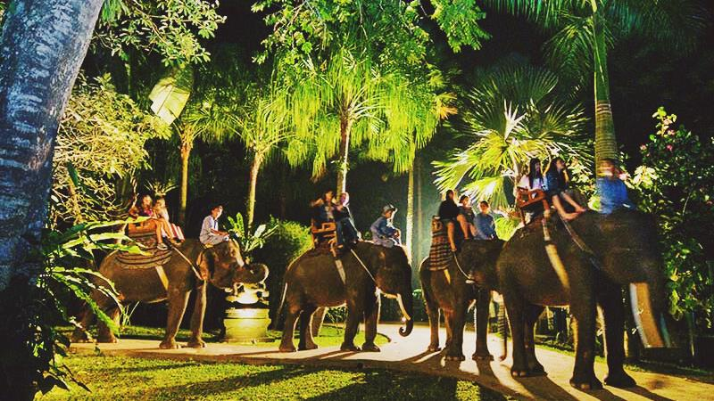Intrigued by the Elephant Ride Bali price? Here goes the explanation! 2