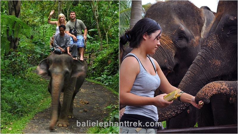 Best Tour of The Taro Elephant Safari Park Bali 1