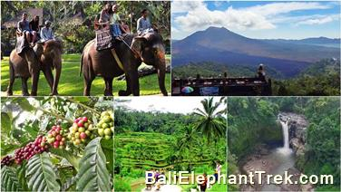 Taro Elephant Ride Bali package