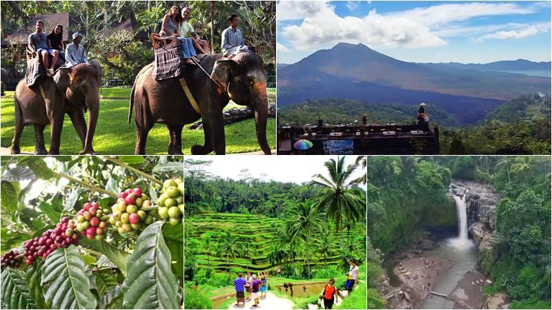 Taro Elephant Ride + Kintamani Volcano + Ubud Tour