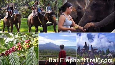 Favourite Combination Bali Elephant Packages 3