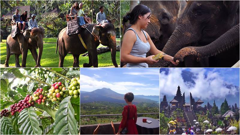 Taro Elephant Ride Bali + Kintamani Volcano + Mother Temple Tour 1